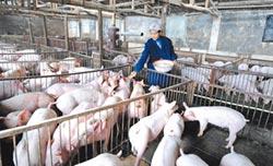 豬事不易 用地放寬-鼓勵養豬 陸耕地鬆綁免審批