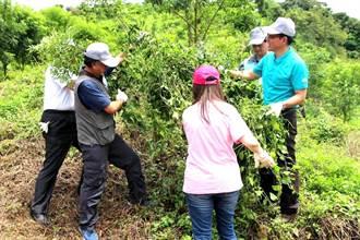 「蔓蔓來 快快除」 政府企業攜手除蔓護林