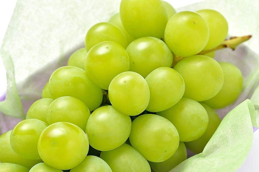 誠品生活號|JPMOMO|麝香葡萄。(圖取自迷誠品網站)