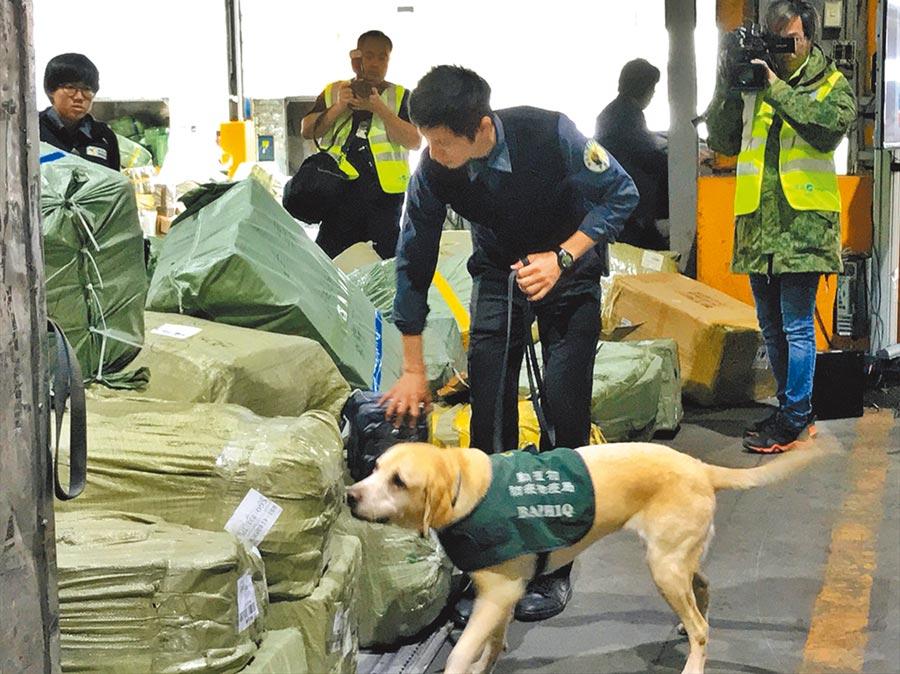 未來口蹄疫疫區直航台灣班機須全面檢查,圖為檢疫犬偵測快遞貨物。(防檢局提供/游昇俯台北傳真)