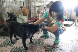 美濃林媽媽狗園一度「糧食短缺」 善心協會急送飼料及時解危