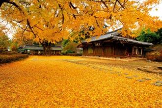韓國秋季賞楓遊 韓式美食慶典一波波