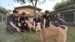 台灣狗節 台中警犬隊辦毛小孩與收容犬相見歡