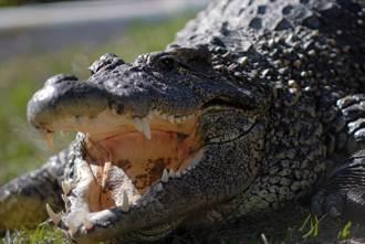 跟蹤6小時獵鱷 驚見怪物體形嚇傻