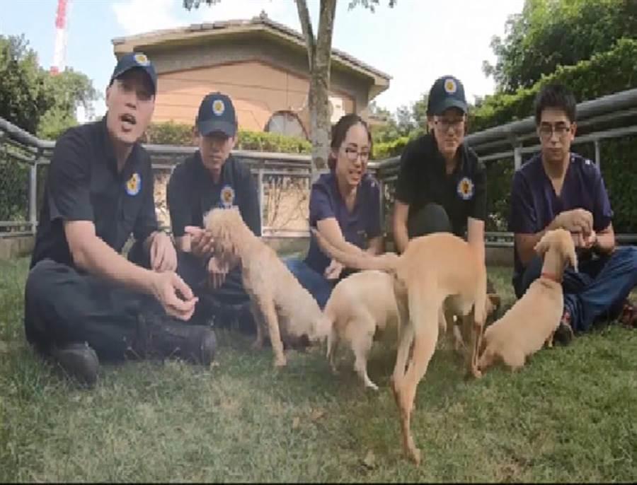 台中市警犬隊警犬與三隻收容犬合拍影片,宣導愛護動物、珍惜犬隻、以領養代替購買等觀念。(台中市警犬隊提供/黃國峰台中傳真)