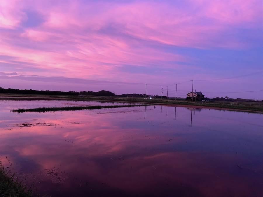 千葉的稻田颱風過後頓成水鄉澤國。