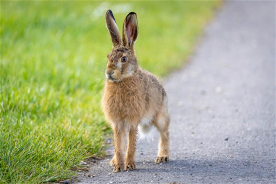 素食女闖農場救兔 竟反害死百隻兔(圖片取自/達志影像)