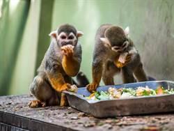 萌!動物慶中秋!汁多味美的水果先嚐、蔬菜後吃