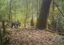 熊熊遇見你 冷靜面對慢慢後退