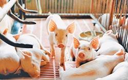 官方出手穩豬價 助民間推人造肉