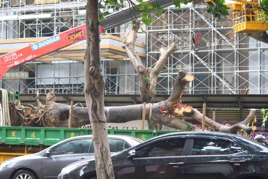 愛樹團體研判,9棵移植的樹木嚴重傷殘、死亡率很高,沒死也只能免強苟活幾年時間。(高雄愛樹人提供/袁庭堯高雄傳真)