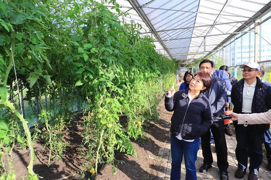 台中市長盧秀燕參訪荷蘭循環經濟園區。(台中市新聞局提供/盧金足台中傳真)
