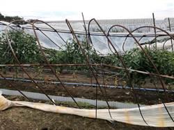 千葉縣農林業颱風受害額逾37億元 10年來最慘重