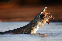 捕魚少年遭鱷魚撕咬 叔見剩屍塊