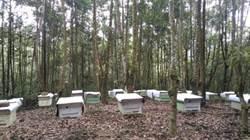 林業用地開放養蜂種香菇 南市農業局鼓勵林農申請