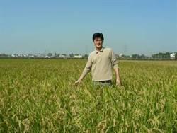 稻米達人冠軍賽 看見農友努力身影