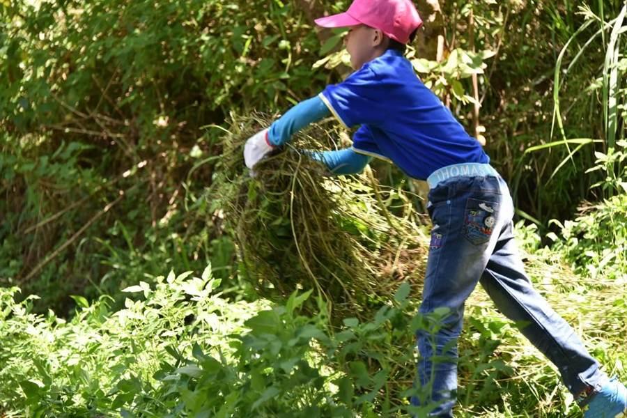 環保尖兵們清除森林間蔓延的小花蔓澤蘭。(林務局新竹林管處提供/巫靜婷傳真)