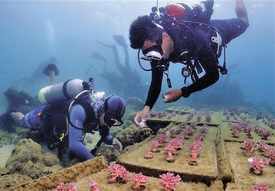澎湖海洋花園生態旅遊體驗,帶您下水海底種珊瑚。(澎湖縣種苗繁殖場提供/陳可文傳真)