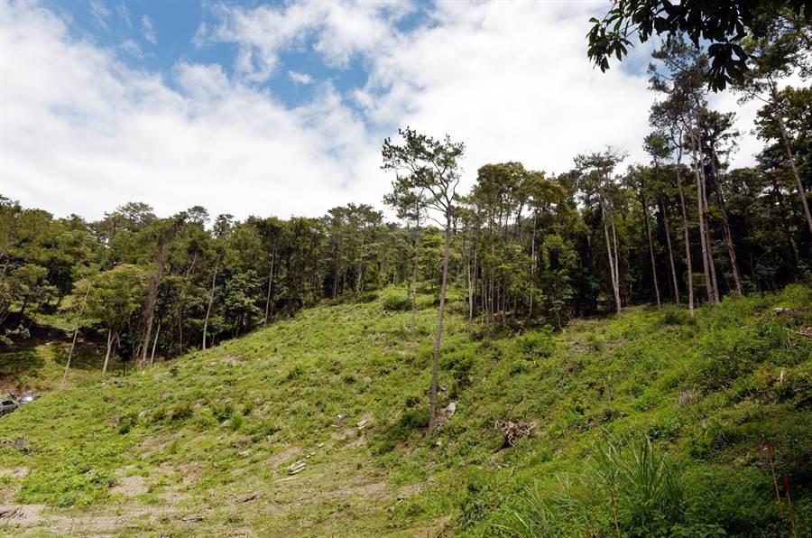 林務局訂定的「國產材驗證制度」年底前上線,使木材來源能夠確認,可扼止盜伐保護森林(示意圖)。(資料照/日月光文教基金會提供、廖德修傳真)