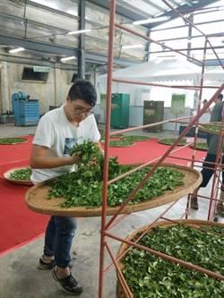 木柵百年製茶世家交棒  24歲張家愷出征全國茶葉競賽