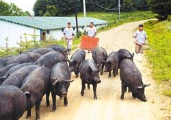搶救經濟大作戰-陸護豬肉產業 20天出手12次
