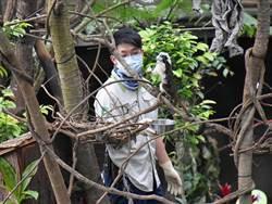 伙食「切切切」!熱帶雨林館「動物餵食」學問大