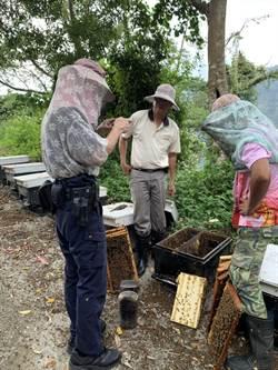 警查超慘命案 500萬隻蜜蜂集體死亡