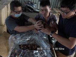 轉口櫃調包走私 台中查緝隊查獲2萬公斤菇