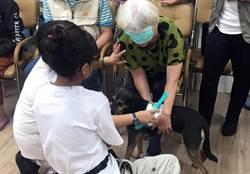 治療犬到部東醫院 瞬間降低失智老人寂寞感