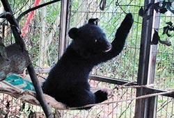 堅忍不拔 台東廣原小熊取名Mulas