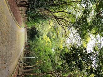 「木木音樂節」與你唱遊東勢林業文化園區