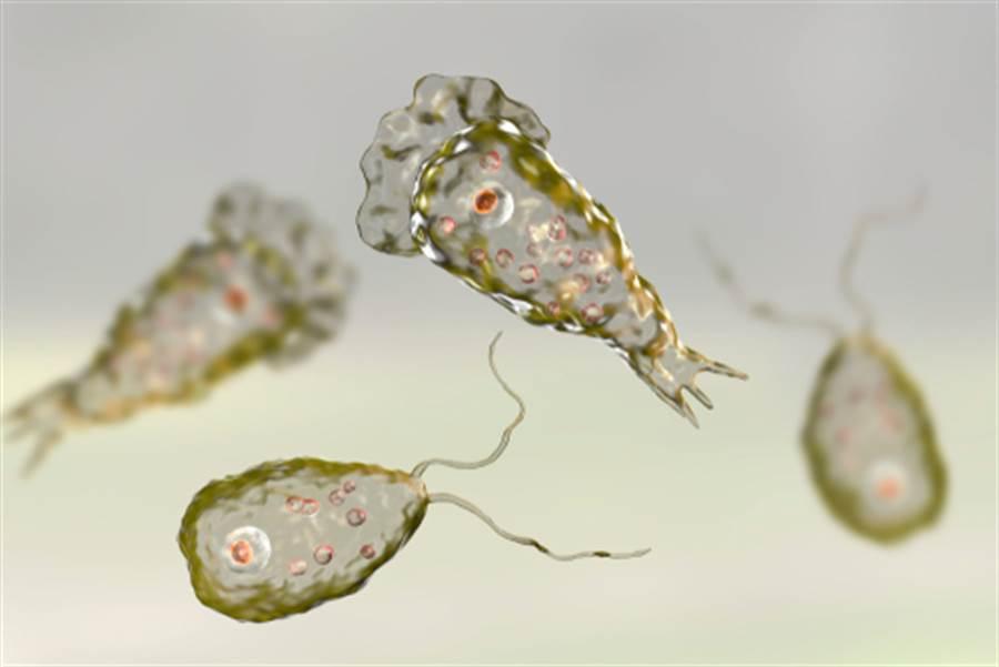 福氏內格里蟲(圖片取自/達志影像)