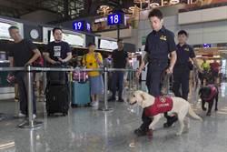 攜毒出國增 9月起緝毒犬穿梭桃機出境大廳