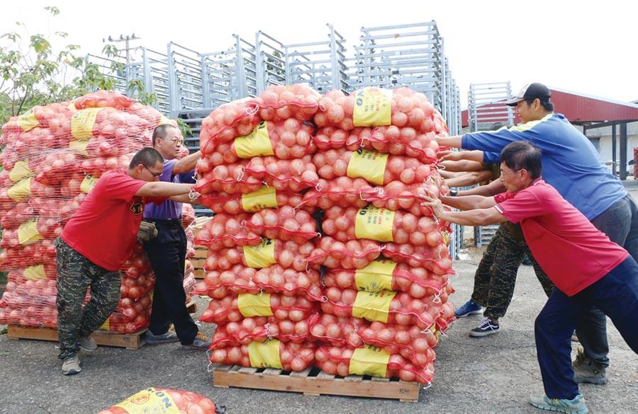 推動讓庶民有感的庶民經濟,可從全力開拓農產品外銷市場,改善農漁業生計著手。圖為屏東洋蔥外銷至日本。圖/本報資料照片