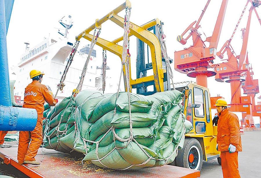 中美重啟新一輪談判在即,陸加碼購買美國大豆。圖為青島港碼頭轉卸的美國大豆。(新華社資料照片)