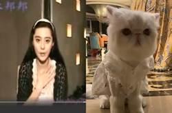 范冰冰13年前伴遊粉絲片曝光 秀愛貓意外洩豪宅內部