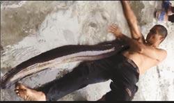 花蓮捕獲25斤大尾鱸鰻 居民稱奇