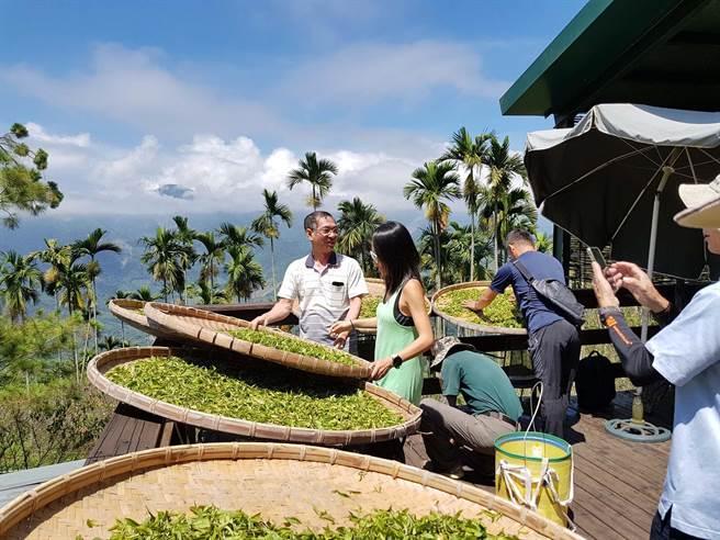 高雄茶商為完成茶農阿公遺願,耗費2年多時間,跑遍全台灣14個茶區,蒐集好茶作為禮盒,要力拚國際茶業市場。(柯宗緯攝)