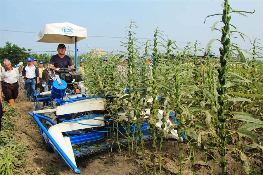 農改場引進割捆機,數年來經過測試及田間觀摩,終於能正式上線。(資料照片,莊曜聰攝)