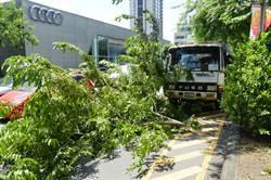 台中風大路樹倒 賓士車遭殃