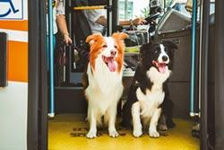 狗狗公車 4線2年沒載過狗