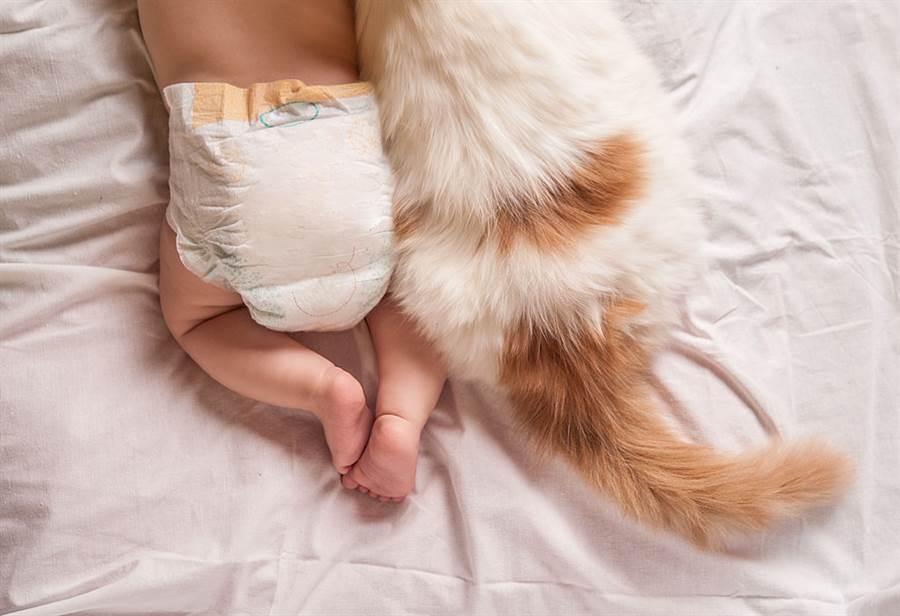 懷孕想送走寵物?理科太太3點勸世(圖/達志影像)