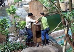 攀高、潛水、當木工!動物園保育十八般武藝樣樣精通