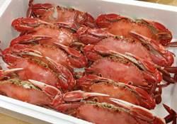 萬里蟹產季起跑 熟蟹禮盒限量開賣