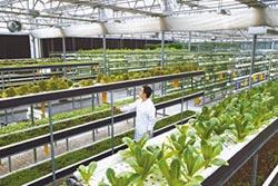 農技創新平台 城中菜園變植物工廠