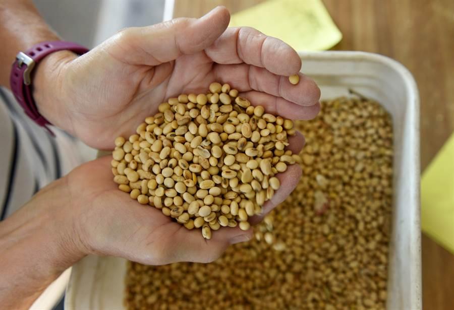 大陸再購入美國大豆,為進展不順美中談判加點潤滑劑。(圖/路透)