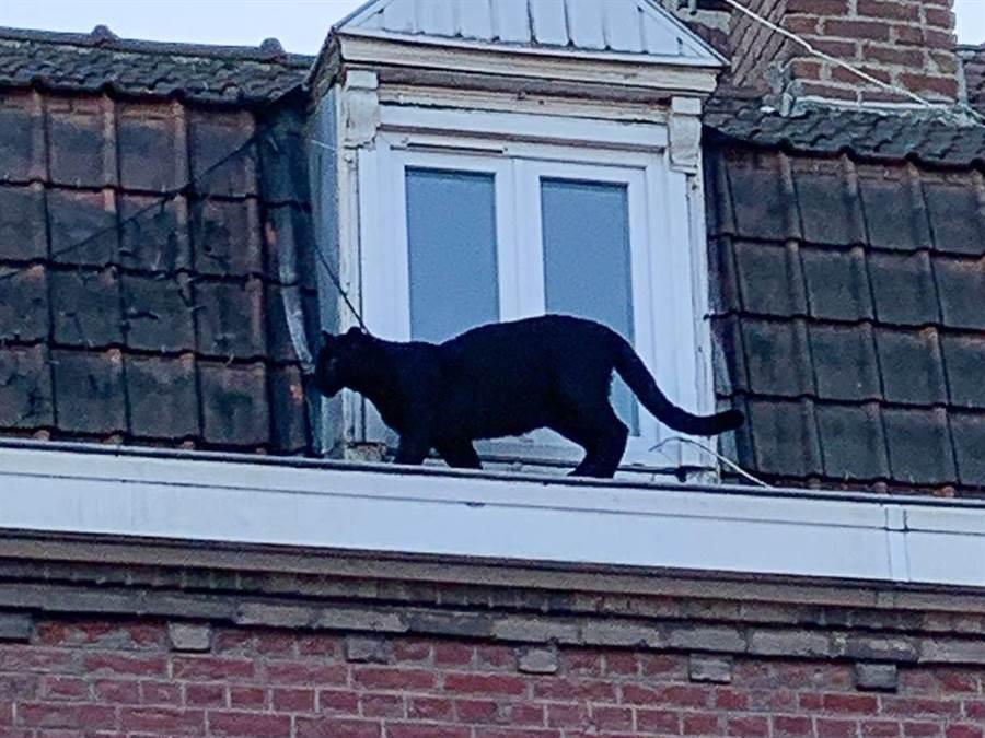 在法國里爾(Lille)附近小鎮阿爾蒙地爾(Armentières)有鄰居發現驚人景象。(摘自BBCNEWS)