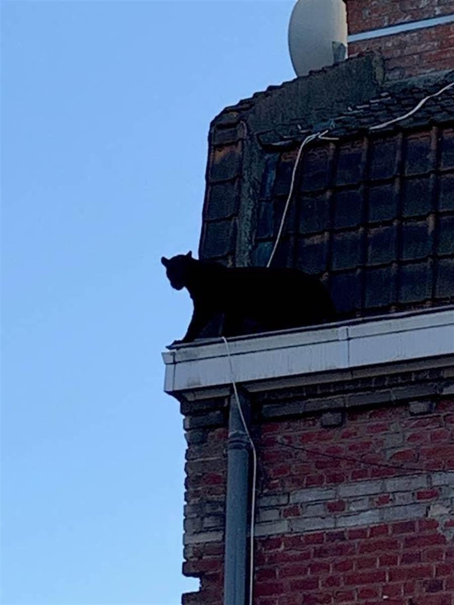 據居民表示,牠當時正在平房的二樓屋頂上游走,震驚目擊到的民眾。(摘自BBCNEWS)