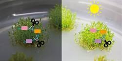 植物為何不開花?中研院發現基因表現調控機制