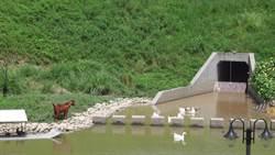 滯洪池用來養雞鴨 台中首罰違規民眾